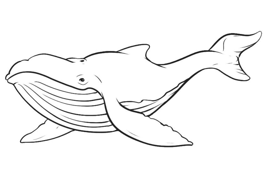 antartica coloring pages - photo#34