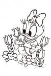 Baby Daisy Duck