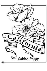 State flower Golden Poppy
