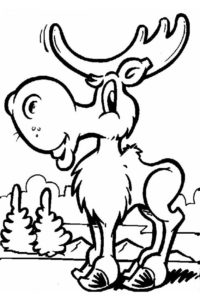 Canadian Moose coloring pages