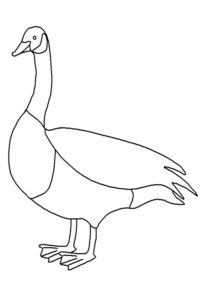 Canada Goose coloring pages