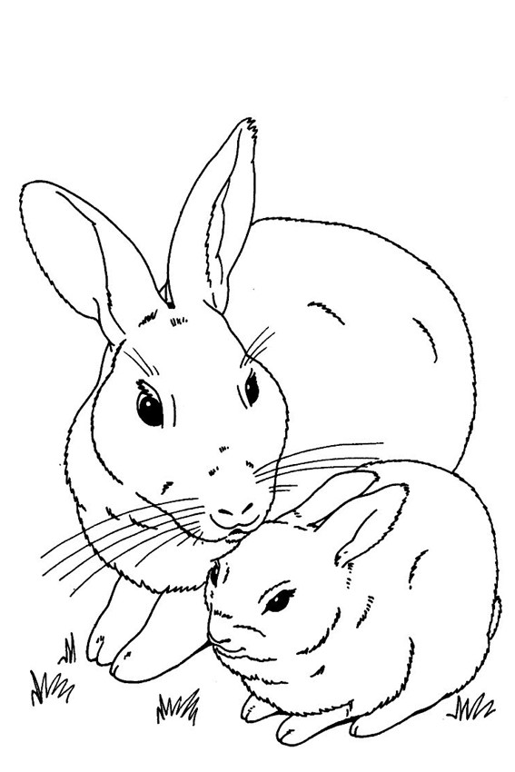 Color in a bunny coloring page in stead of buying some pets for Rabbit coloring pages