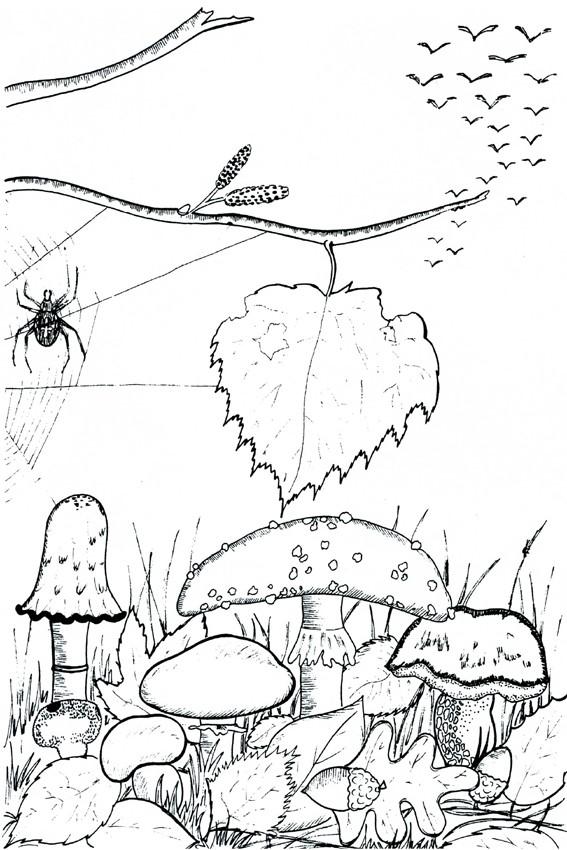 ... Fall Season Coloring Page