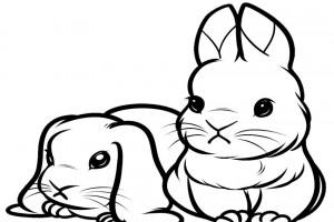 Cute lop bunnies