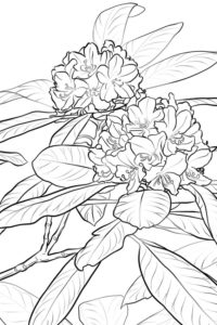 Washington state flower
