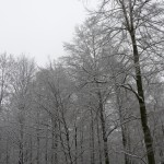 Background of winter 005